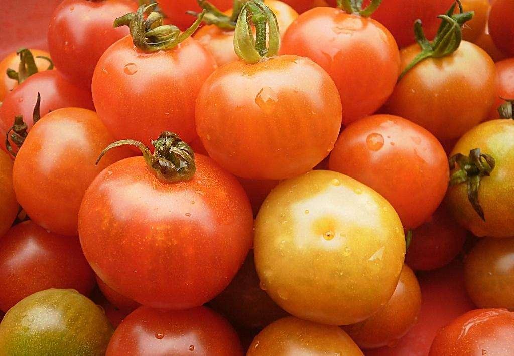 Offer Tomato Paste, Tomato Sauce