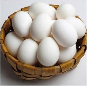 Buy Vulture eggs