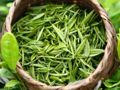 Green tea Fanning