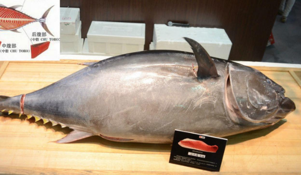 Iced bluefin tuna