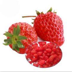 High nutritional value Premium Quality Strawberry dried fruit