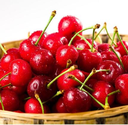 Please give a quotation of Cherry